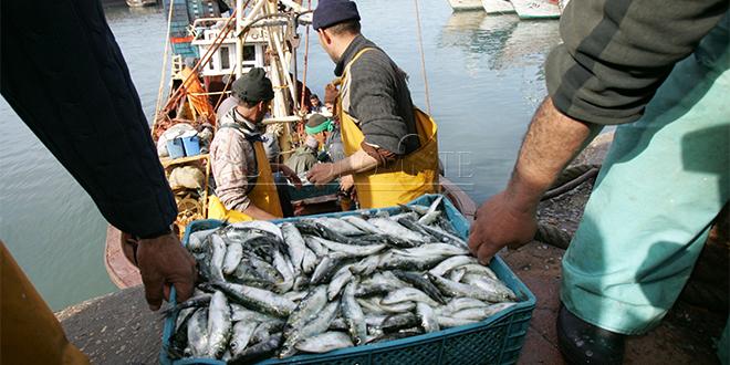 Pêche : Les captures bondissent de 19%