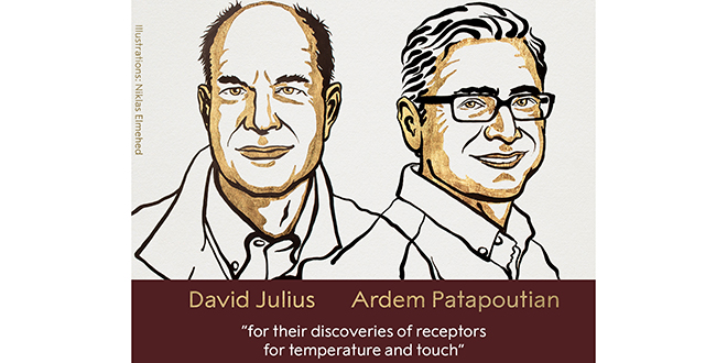 Deux Américains décrochent le prix Nobel de médecine