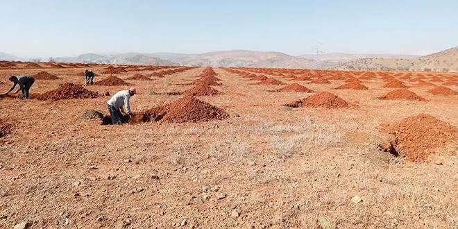 Al Hoceima : Les projets agricoles achevés avant fin 2019