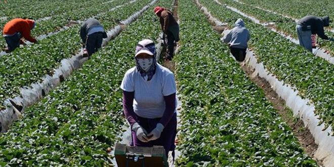 France : Le procès de 5 travailleurs agricoles marocains reporté