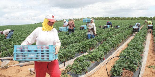 Huelva: 500 saisonnières marocaines arrivent