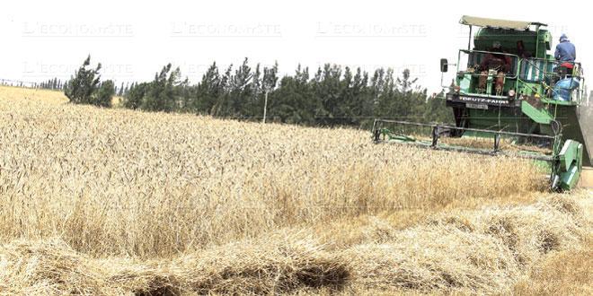 Casablanca-Settat/Salon de la céréaliculture: Les défis du climat et du marché