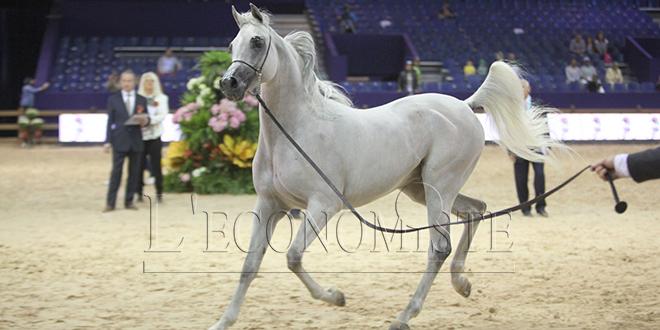 El Jadida: Le salon du cheval encore annulé