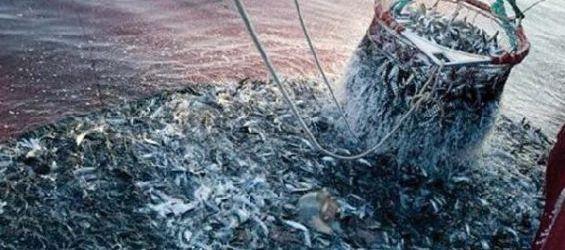 Produits halieutiques : Le Maroc tâte le marché russe