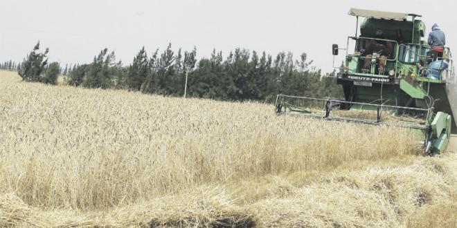 Agriculture: 900 millions de DH pour financer les petits exploitants