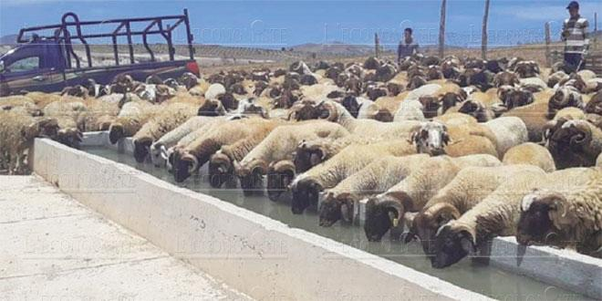 Oriental: Les viandes rouges, une filière mal exploitée