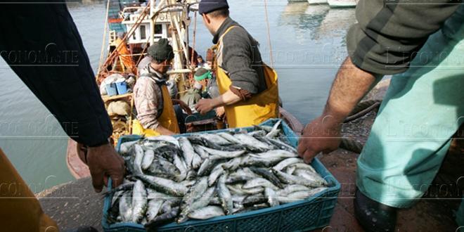 Coopération halieutique: nouvel accord entre le Maroc et la Russie