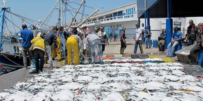 Pêche: Hausse de la valeur des débarquements
