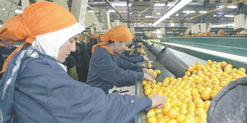 Accord agricole Maroc-UE: Les professionnels se mobilisent