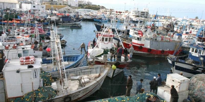Pêche: Forte hausse des débarquements au 1er semestre