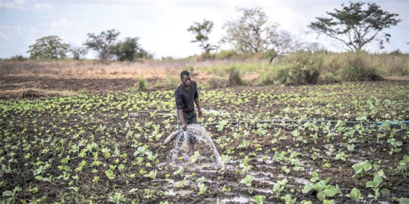 Comment nourrir l'Afrique durablement