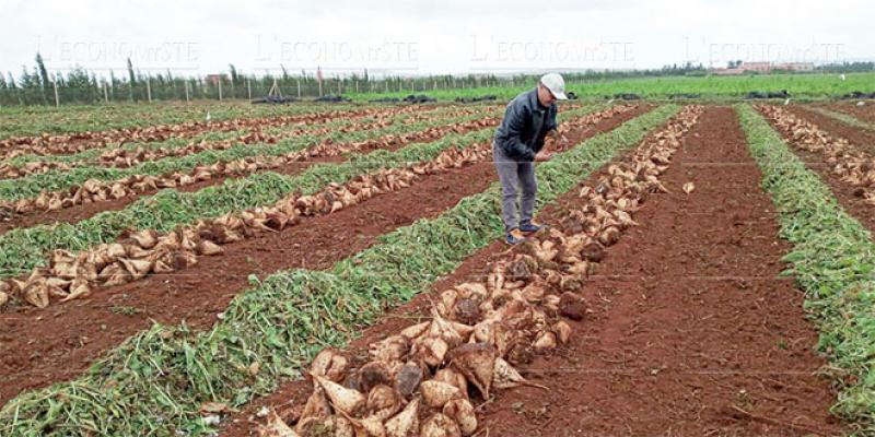 Agriculture/Agrégation: Un nouveau dispositif réglementaire en place