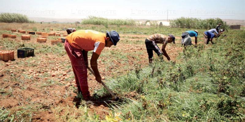 OCP lance une appli au service des agriculteurs