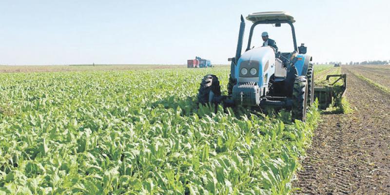 Fès-Meknès rassurée sur son agriculture