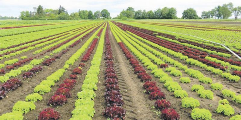 Campagne agricole: Des signes de redressement