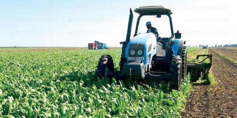 Campagne agricole: La perspective d'une bonne récolte se confirme