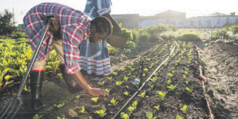 Développement durable: L'Afrique appelée à accélérer le rythme