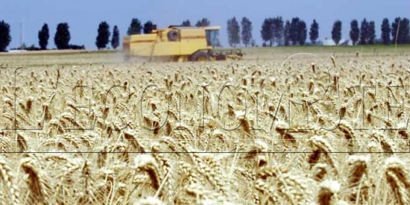 Agriculture/Casablanca-Settat: La Région, nouveau grenier du Maroc?