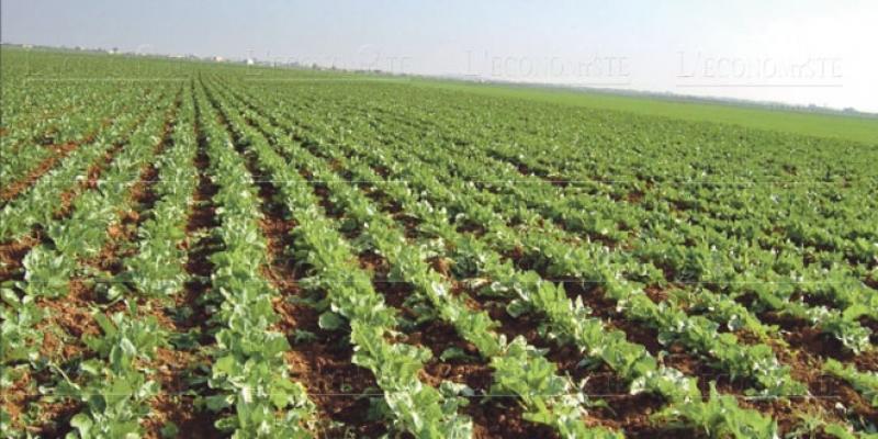 Marrakech-Safi: Comment l'agriculture a changé la région