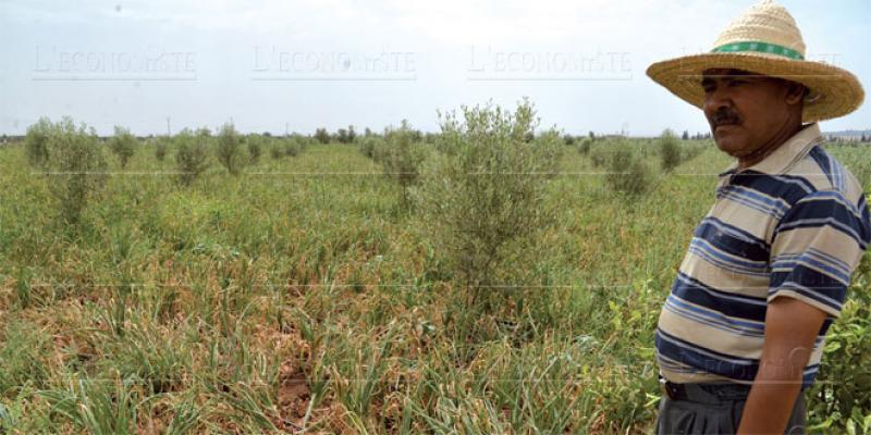 Fès-Meknès se penche sur l'agriculture durable