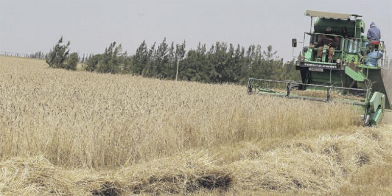 Comment l'INRA a investi un siècle dans la recherche agronomique