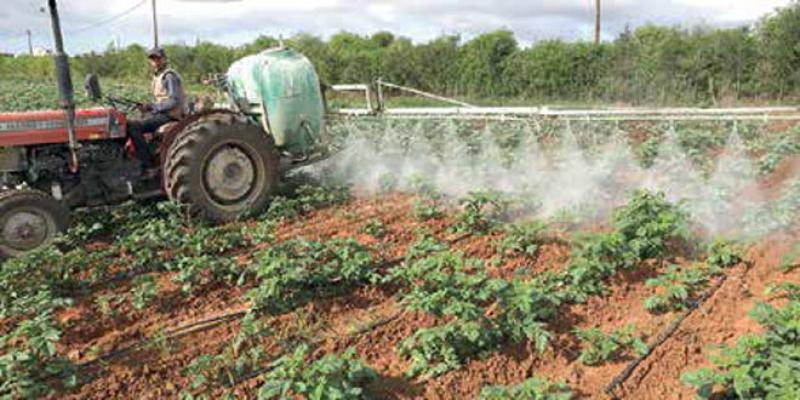 Agriculture: Des lois stratégiques relancées