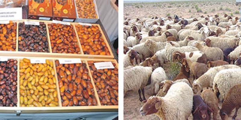 Agriculture: L'Oriental passe en mode agrégation