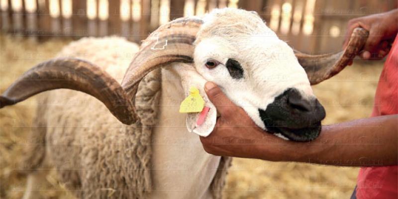 Aïd Al-Adha: Une éclaircie bienvenue pour le rural