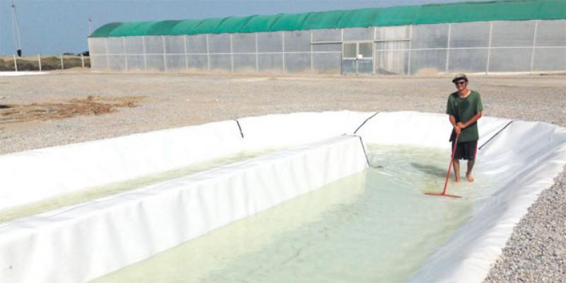 Algae Cluster, un méga-projet dans l'aquaculture