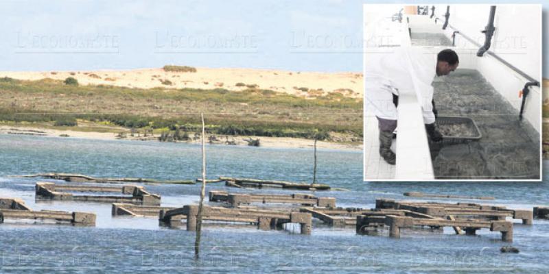 Aquaculture: Opération séduction dans le Souss Massa