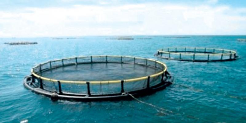 Agadir, nouveau fief de l'aquaculture
