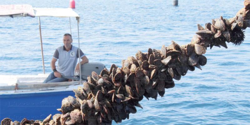 Nord: Appui technique pour l'aquaculture