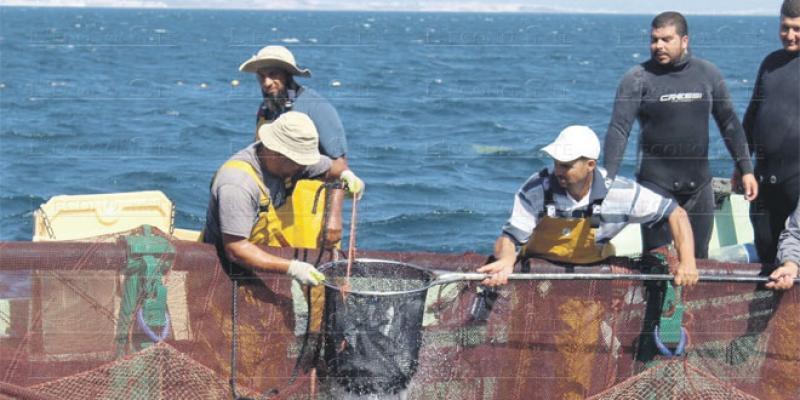 Aquaculture: Un métier qui exige de la patience
