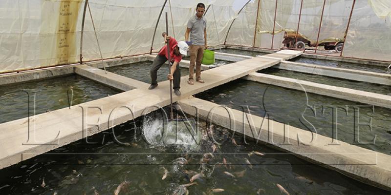 Aquaculture : Enfin des projets à Al Hoceima