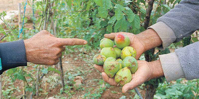 Une aide publique pour l'arboriculture fruitière