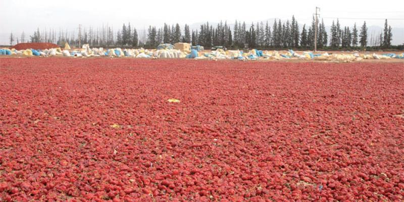Béni Mellal-Khénifra: Un Plan de développement agricole jusqu'à 2020