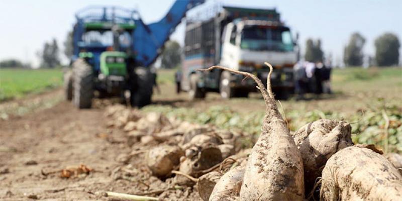 Agriculture - Agro-industrie: Des avancées et des déficits de valorisation