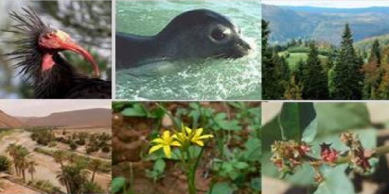 Biodiversité: 600 espèces animales et 1.700 plantes menacées d'extinction