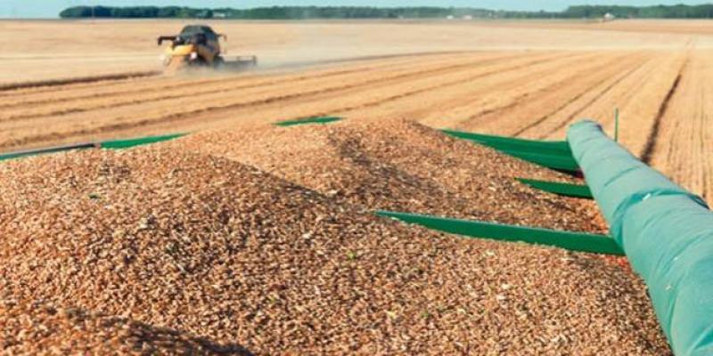 1 DH investi rapporte 34 DH pour le blé dur
