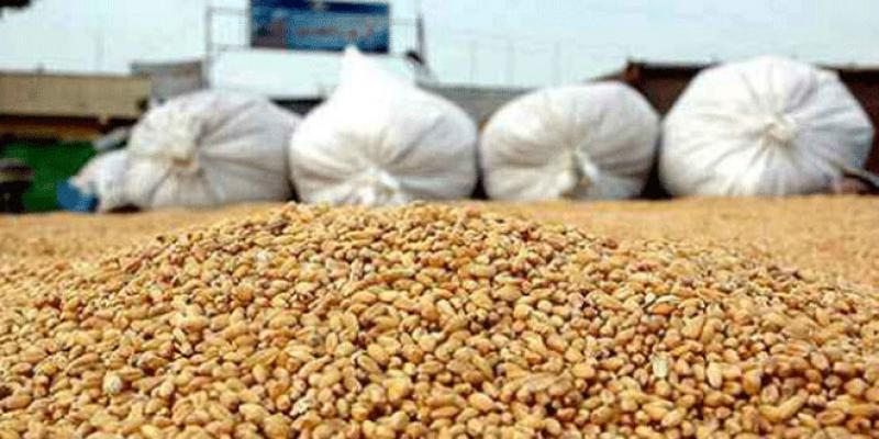 Céréales: Deux bonnes récoltes et un record à l'import