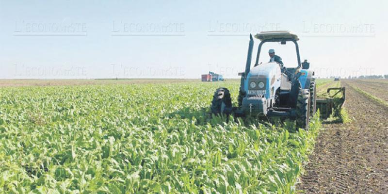 Campagne agricole: C'est bien parti pour la région de Rabat