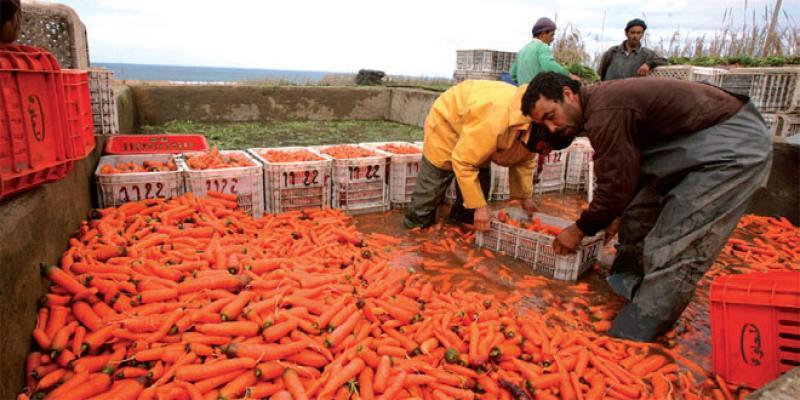 Agriculture: Plus de 15 milliards de DH programmés pour 2019