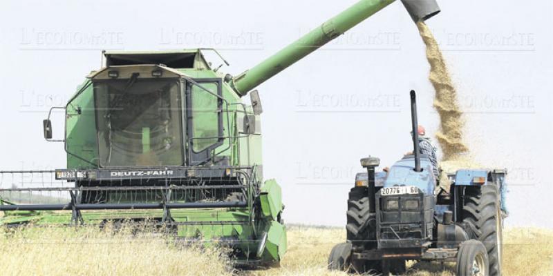 Fès-Meknès: Gros potentiel dans la céréaliculture