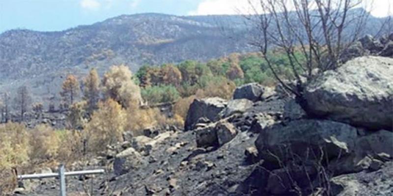 Chefchaouen: Après les incendies de forêt, la réhabilitation