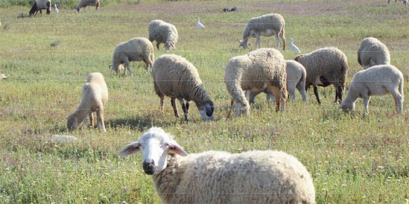 Oriental: Les pluies d'avril sauvent la saison agricole