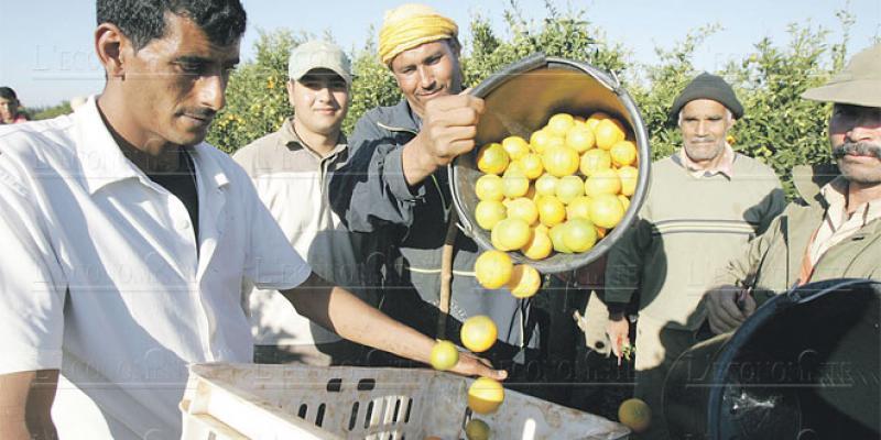 Citron: La flambée des prix met à nu la précarité de la filière