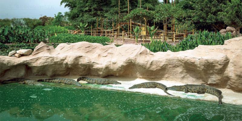 Agadir: Crocoparc accueille ses bébés anacondas