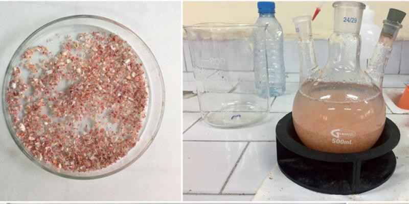 Déchets de crustacés et céphalopodes: Une manne financière «jetée à la poubelle»