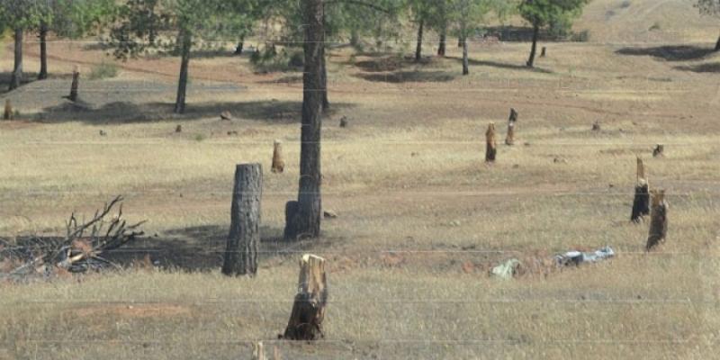 «Malentendu» sur la déforestation...