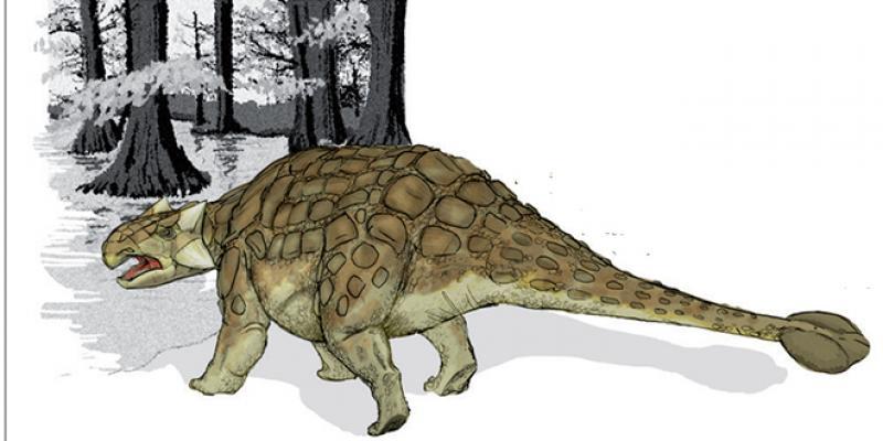 Avant la chute de l'astéroïde qui a causé leur extinction, les espèces de dinosaures étaient déjà sur le déclin